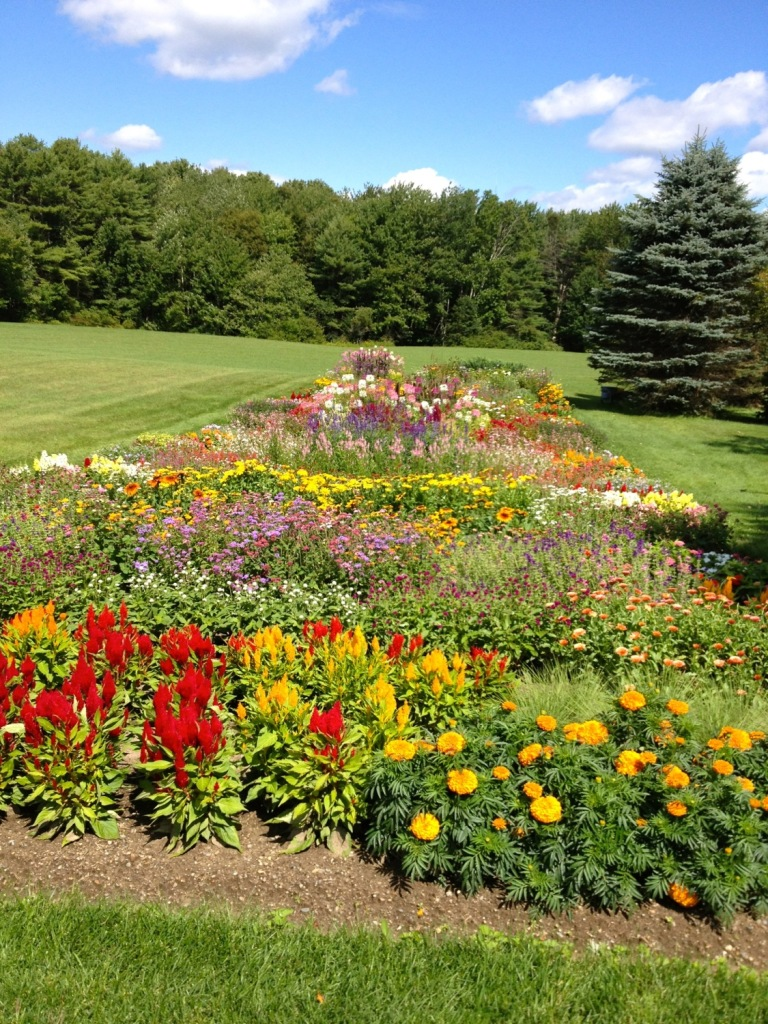An absolutely unblemished cutting garden outside Brunswick, Maine