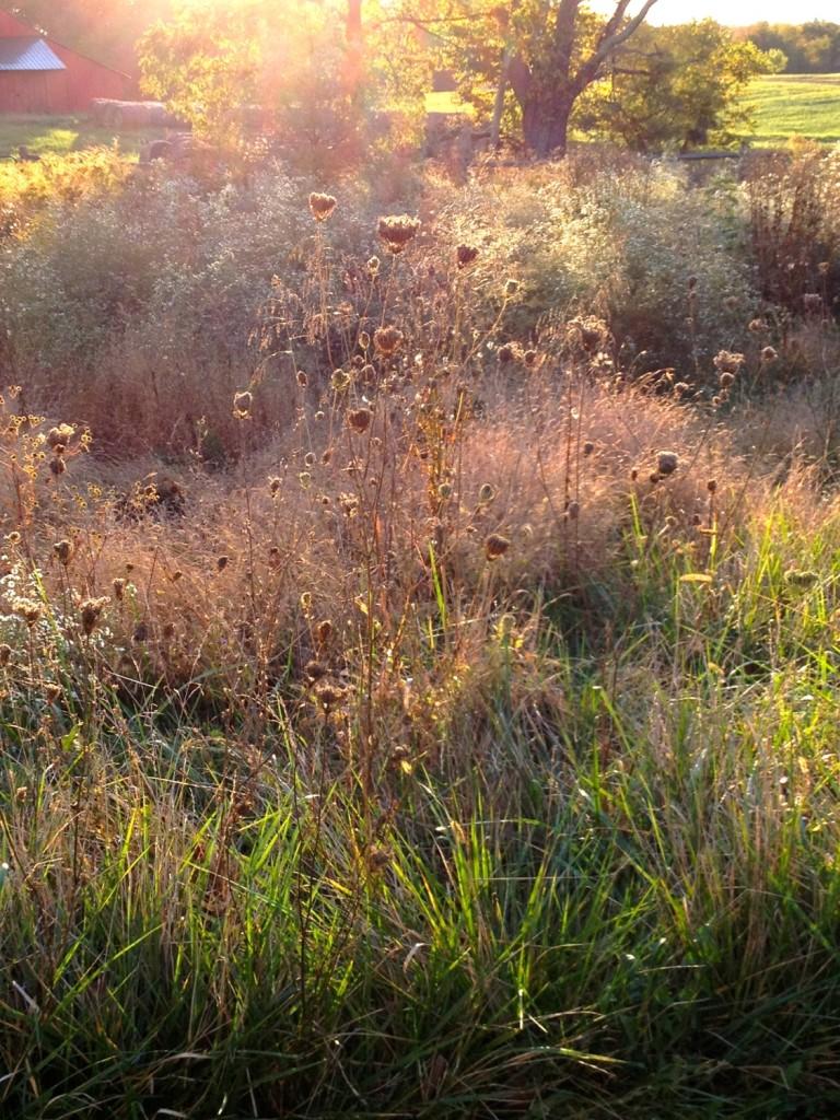 Meadow Oct 2015