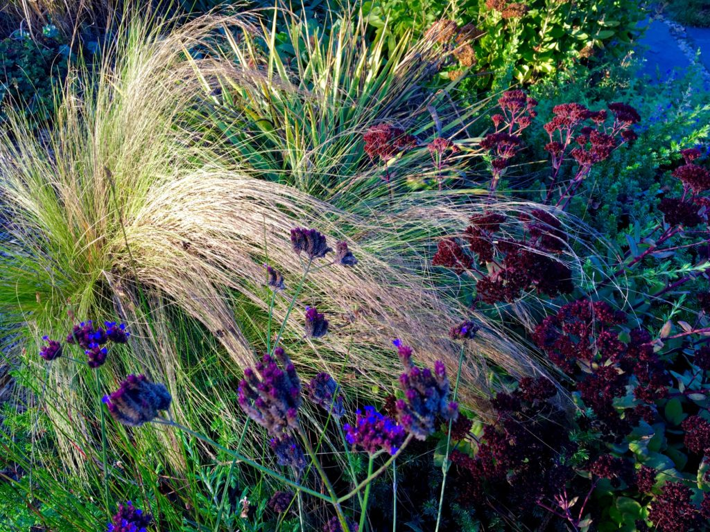 Stipa and Thunderhead Sedum